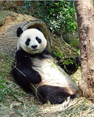 Google Panda büntetések okai