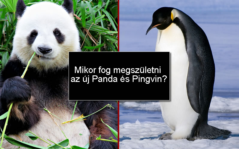 Mikor jön az új Pingvin vagy Panda algoritmus?