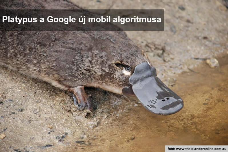 Google Platypus mobil algoritmusa a felhasználói élményt fogja ellenőrizni