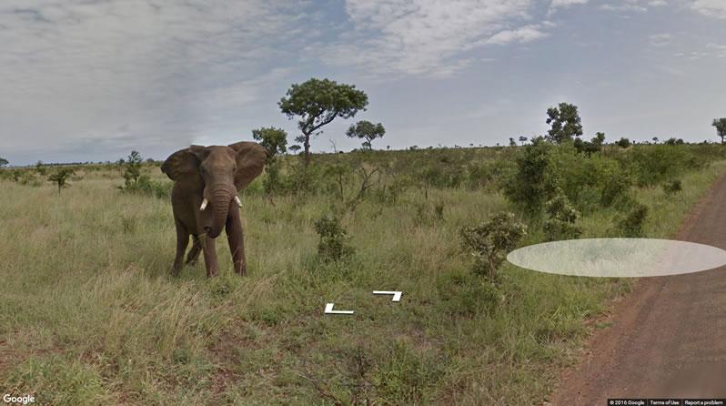 Google kamerái Afrikában